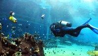 Plongée sous marine Brevet en Languedoc-Roussillon