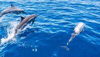 Week end Nage avec les dauphins