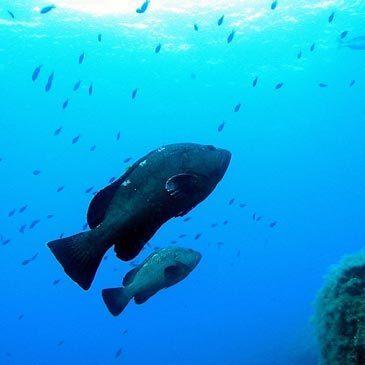 Brevet de Plongée Sous Marine, département Corse du Sud