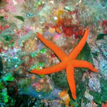 Nice, Alpes Maritimes (06) - Brevet plongée sous marine
