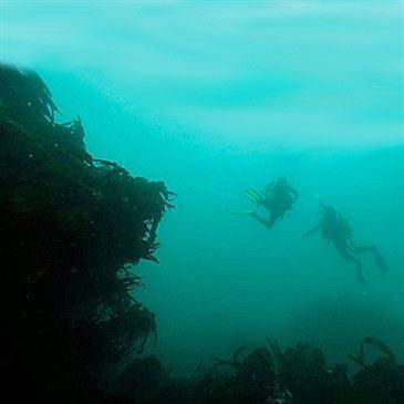 Brevet de plongée Niveau 1 (CMAS)