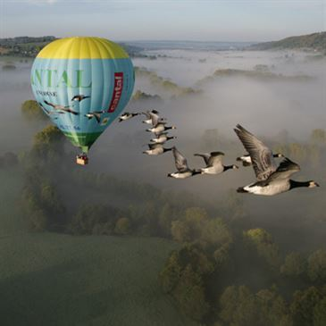 Vol en Montgolfière et Vol avec les Oiseaux Cantal