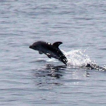 Week end nage avec les dauphins hôtel*** Cannes
