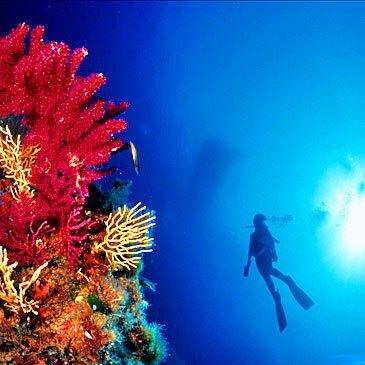 Brevet plongée sous marine proche Fréjus