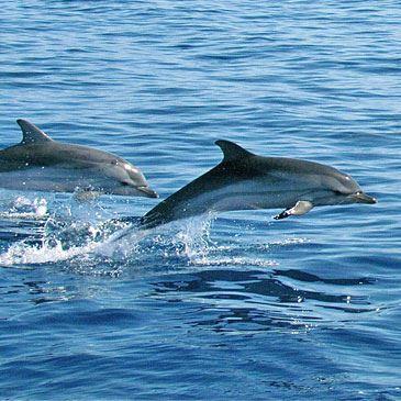 Rencontre avec les baleines et les dauphins