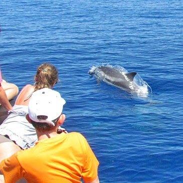 Nager avec les dauphins, département Alpes Maritimes