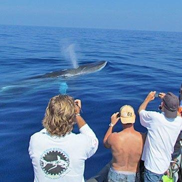 Cannes Mandelieu, Alpes Maritimes (06) - Nager avec les dauphins
