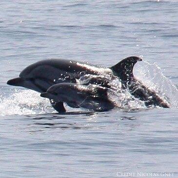 Nager avec les dauphins en région Provence-Alpes-Côte d'Azur et Corse