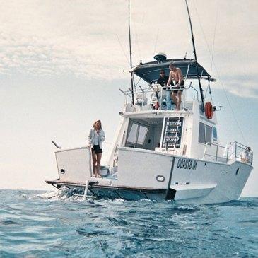 Nager avec les Dauphins à Cannes en région Provence-Alpes-Côte d'Azur et Corse