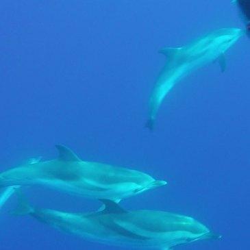 Réserver Nager avec les dauphins en Provence-Alpes-Côte d'Azur et Corse