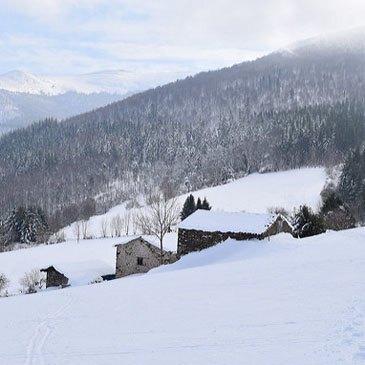 Chien de Traîneau en région Midi-Pyrénées