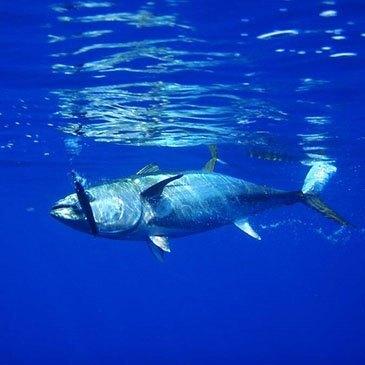 Pêche au Gros en Atlantique à Capbreton