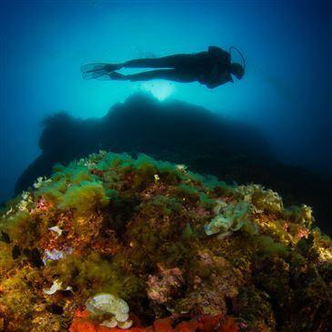 Nice, à 10 min de Villefranche-sur-Mer, Alpes Maritimes (06) - Baptême de plongée