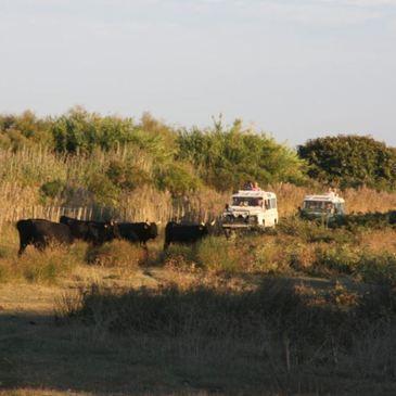 Randonnée Safari en 4x4 en Camargue près d'Arles