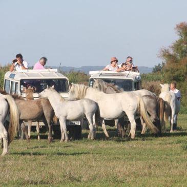 Randonnée Safari en 4x4 en Camargue à Aigues-Mortes