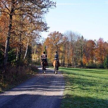 Balade à Cheval Privative au Bois de Boulogne