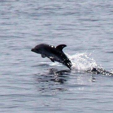 Week end Nage avec les dauphins, département Alpes Maritimes
