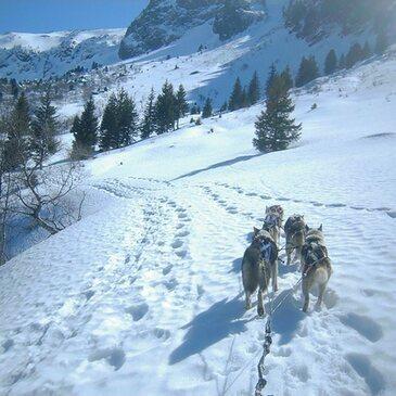 Randonnée en Chiens de Traîneau près de Grenoble