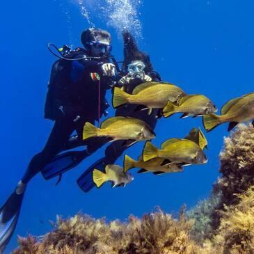 Journée de Plongée et Snorkeling à Port-Cros