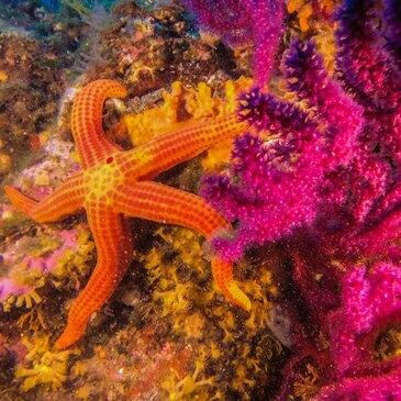 Journée de Plongée et Snorkeling à Port-Cros en région Provence-Alpes-Côte d'Azur et Corse