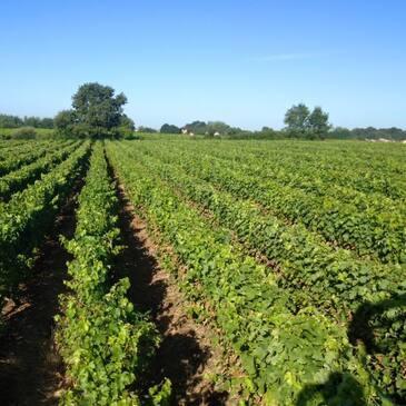 Cours d'œnologie en région Pays-de-la-Loire