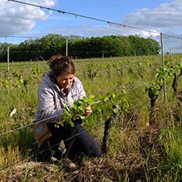 Maine et loire (49) Pays-de-la-Loire - Urbain