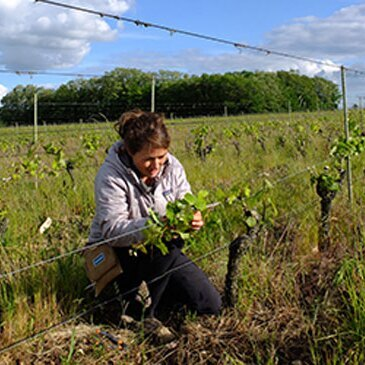 Cours d'œnologie, département Loire Atlantique