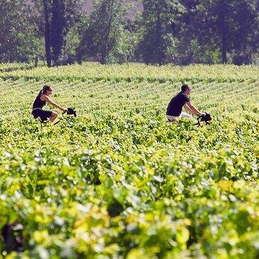 Œnotourisme près de Bordeaux