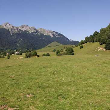 Chien de Traîneau en région Languedoc-Roussillon