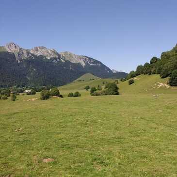 Thèze, à 30 min de Pau, Pyrénées atlantiques (64) - Chien de Traîneau