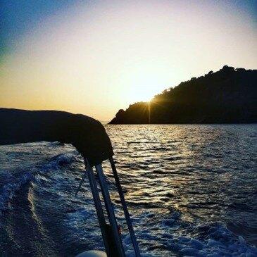 Balade en bateau proche Presqu'île de Giens
