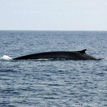 Mandelieu-la-Napoule, Alpes Maritimes (06) - Nager avec les dauphins