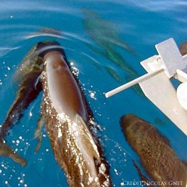Nager avec les dauphins proche Mandelieu-la-Napoule